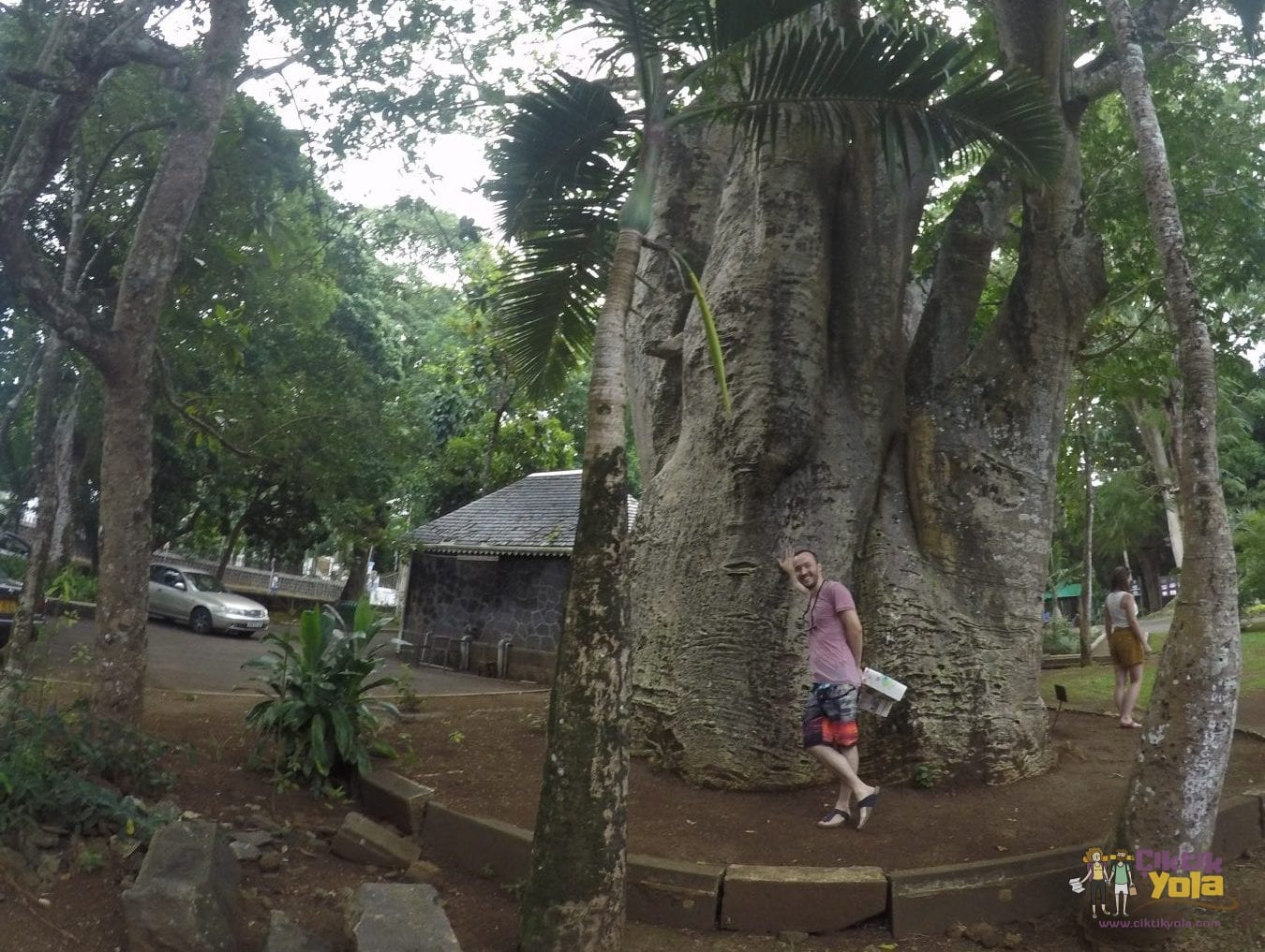 ağaç mauritius botanik