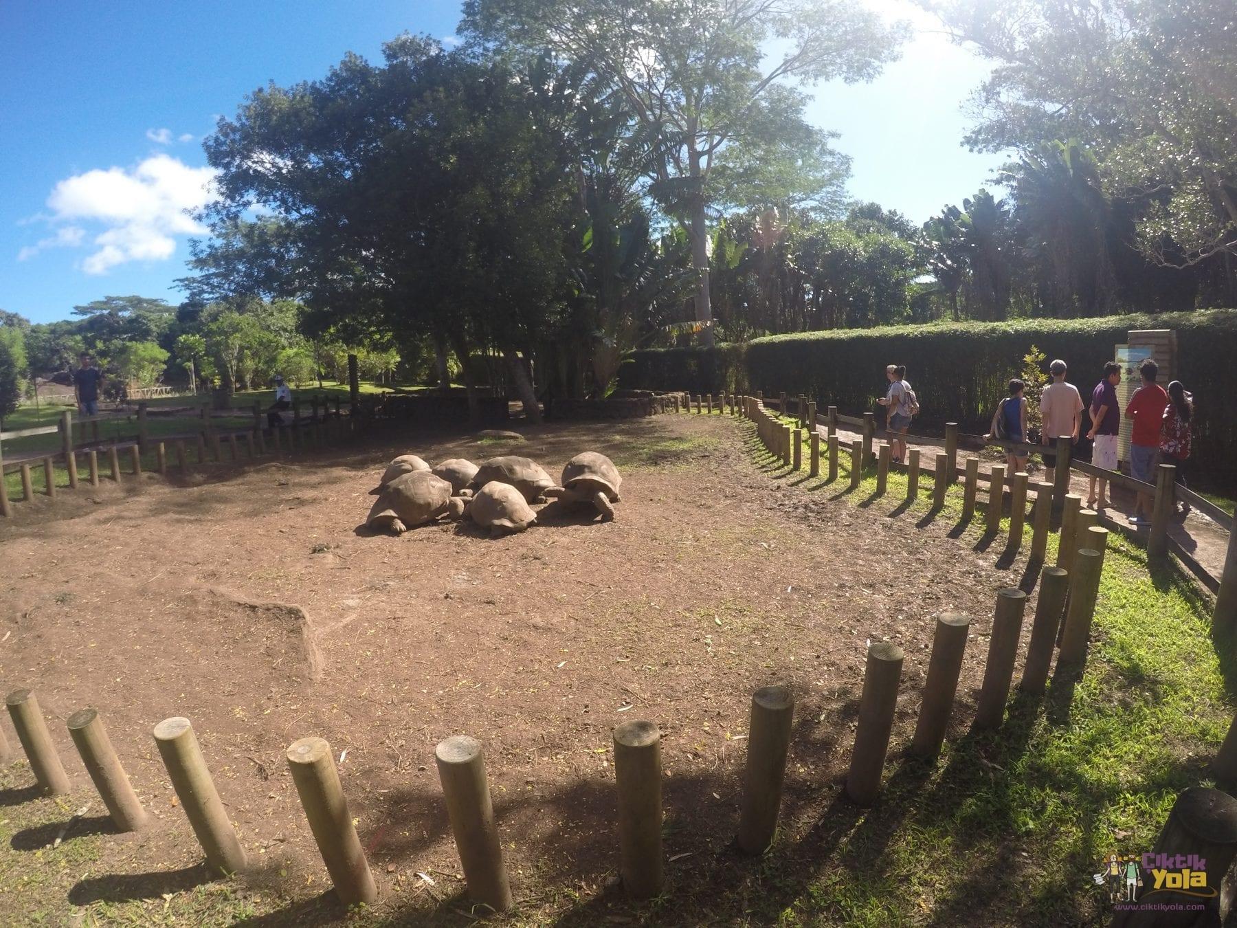 dev kaplumbağa mauritius