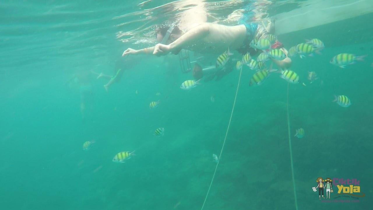 Swimming with fish