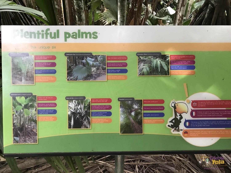 Vallée de mai Palms