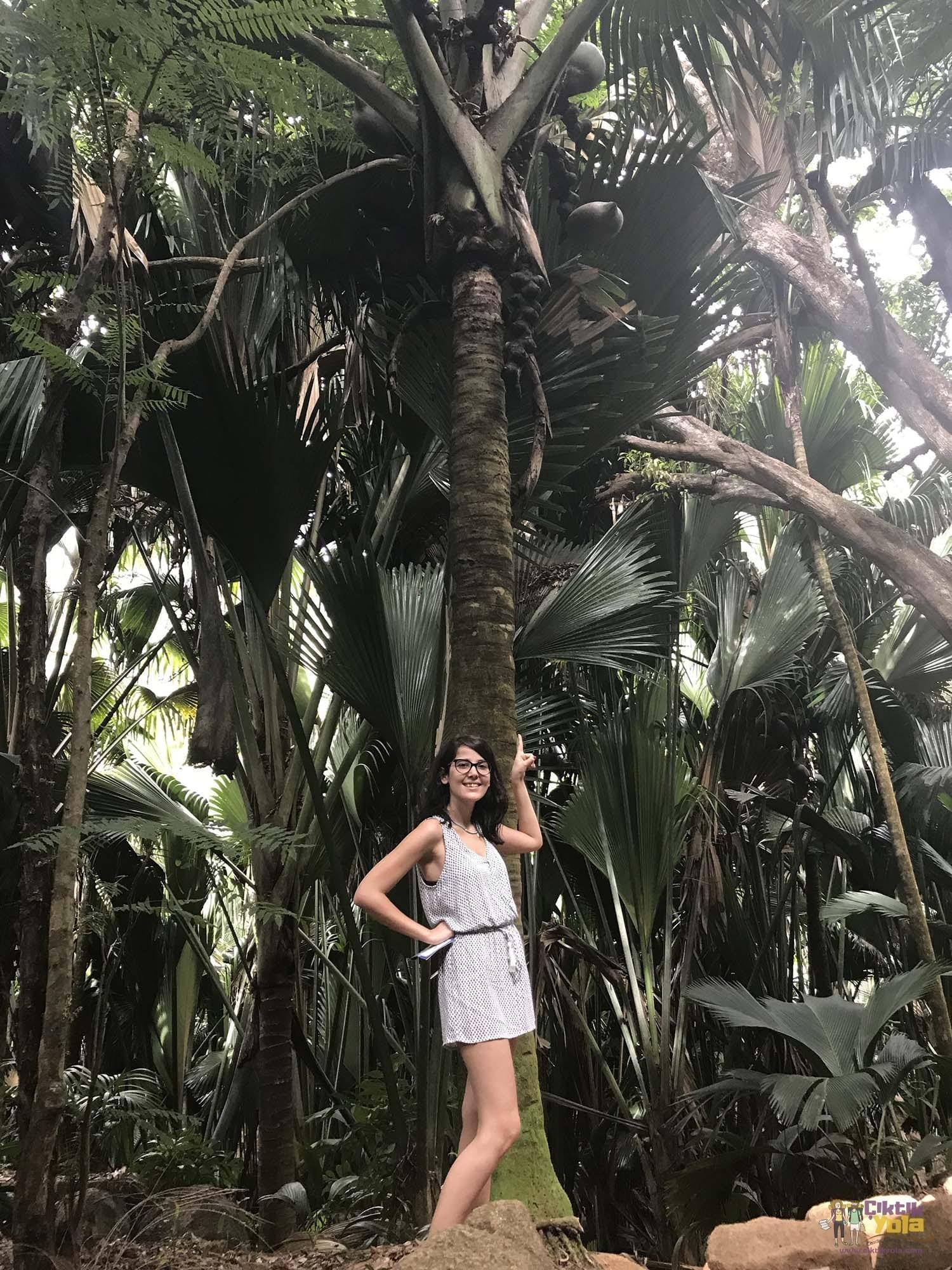 palm praslin valléee de mai coco de mer