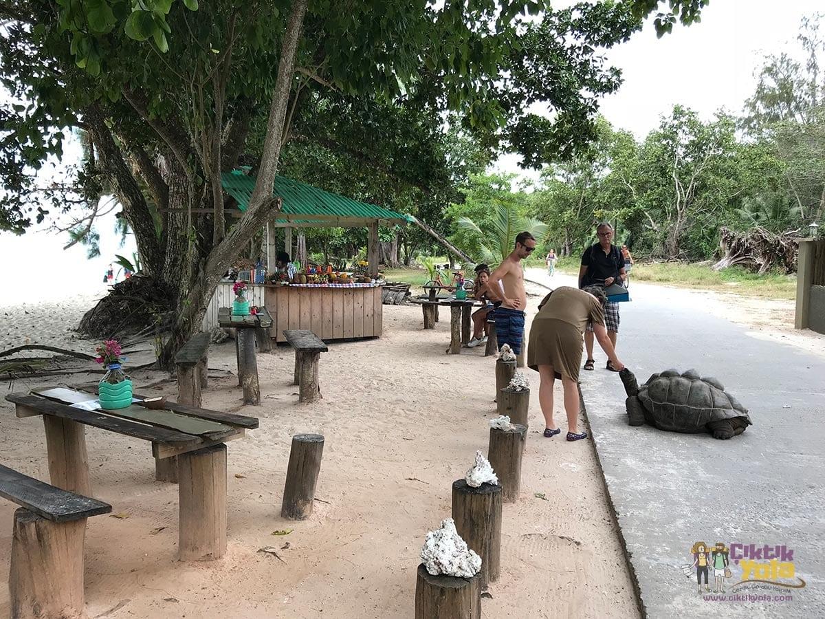 giant turtoise seychelles la digue